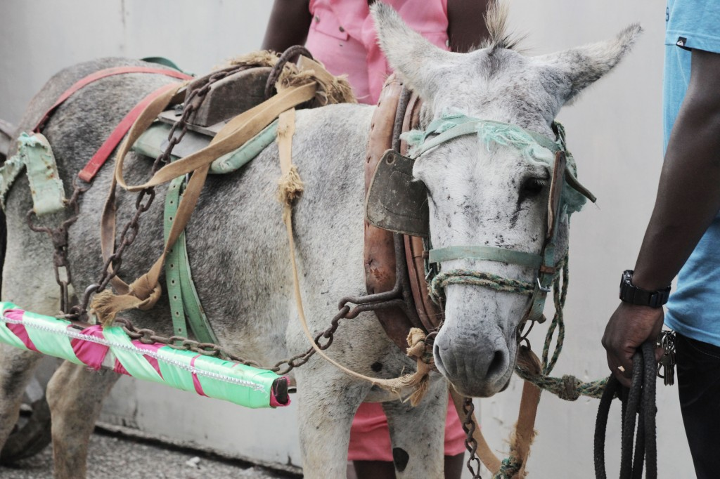A festive donkey at Crop Over festival.