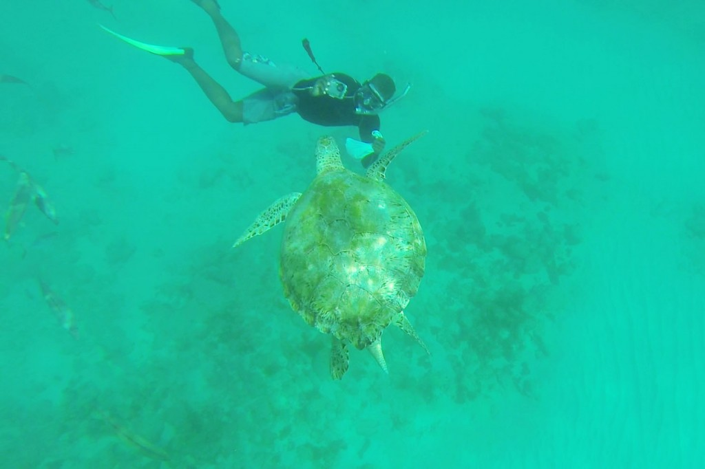 A giant sea turtle swims up to our guide Roddy