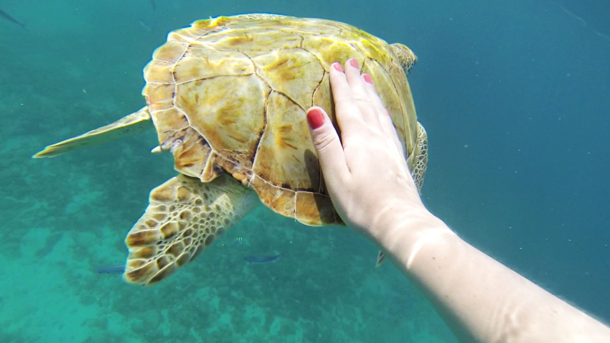 Reaching out to touch a turtle