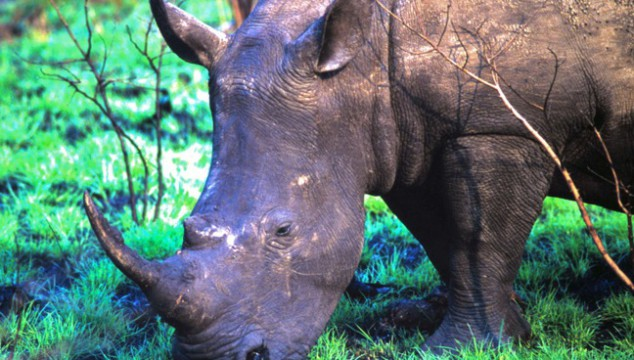 Take charge to save the rhinos (and win some amazing prizes)!